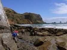 Учёные нашли окаменелые останки доисторических обитателей приполярного края