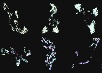 паутину превратили в молекулярный динамометр
