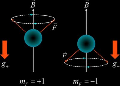 Падающие атомы проверили закрученность пространства-времени