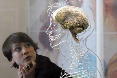 Найден способ предотвратить смерть мозга
